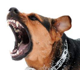 dog-bite-attorney